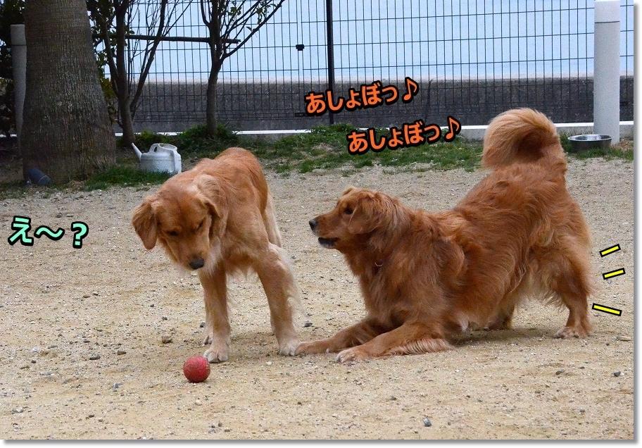 DSC_0412遊べっ! え~