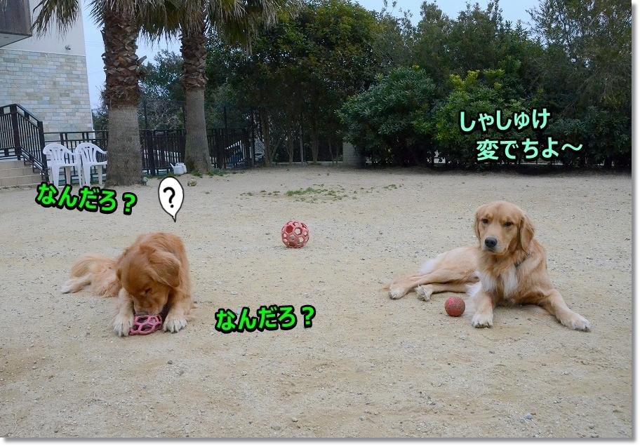 DSC_0456しゃしゅけ変