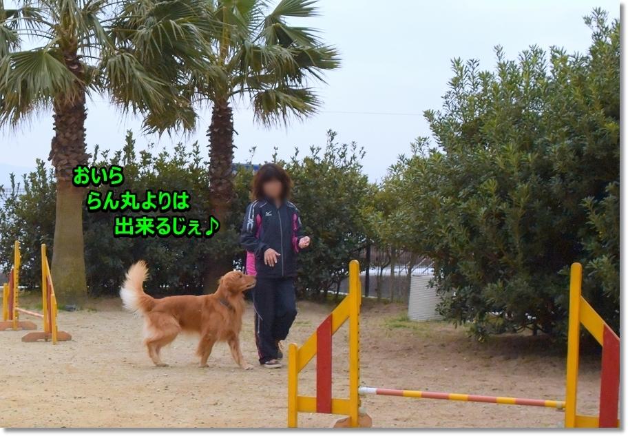 DSC_4549サスケ