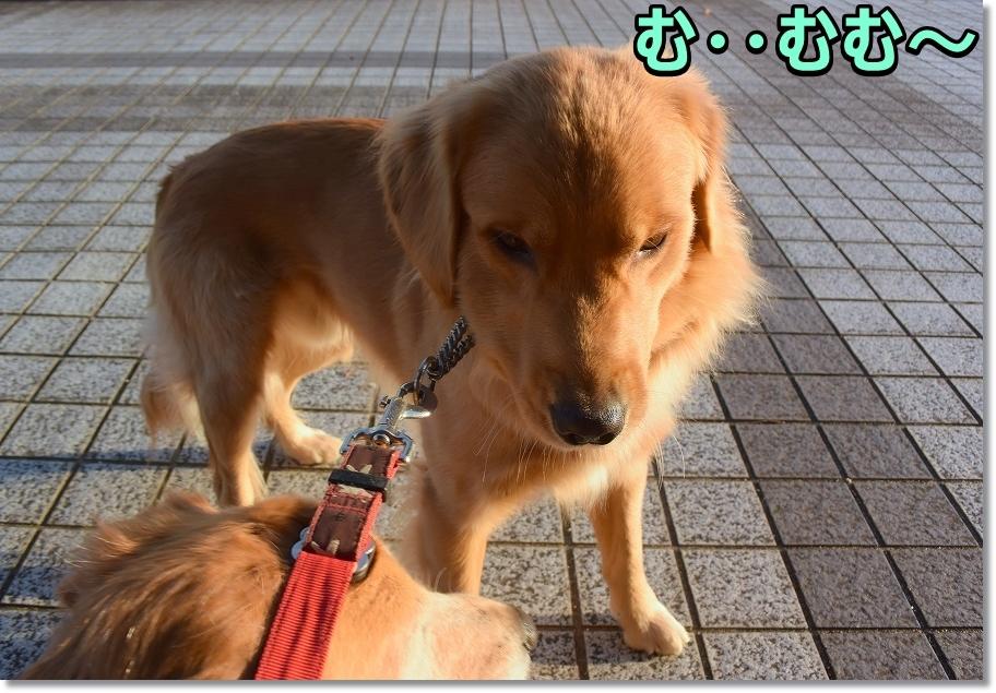 DSC_4892むむ~