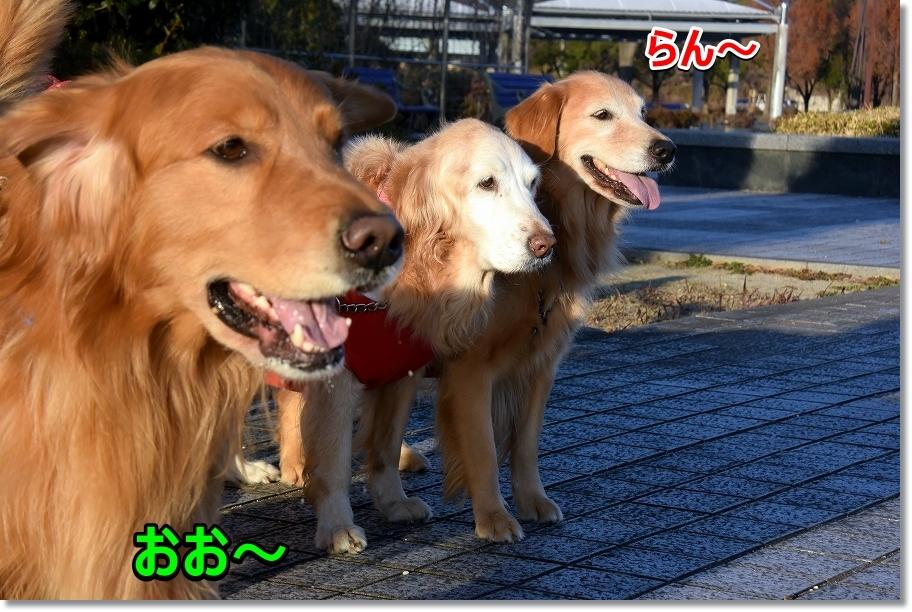 DSC_4916おお~