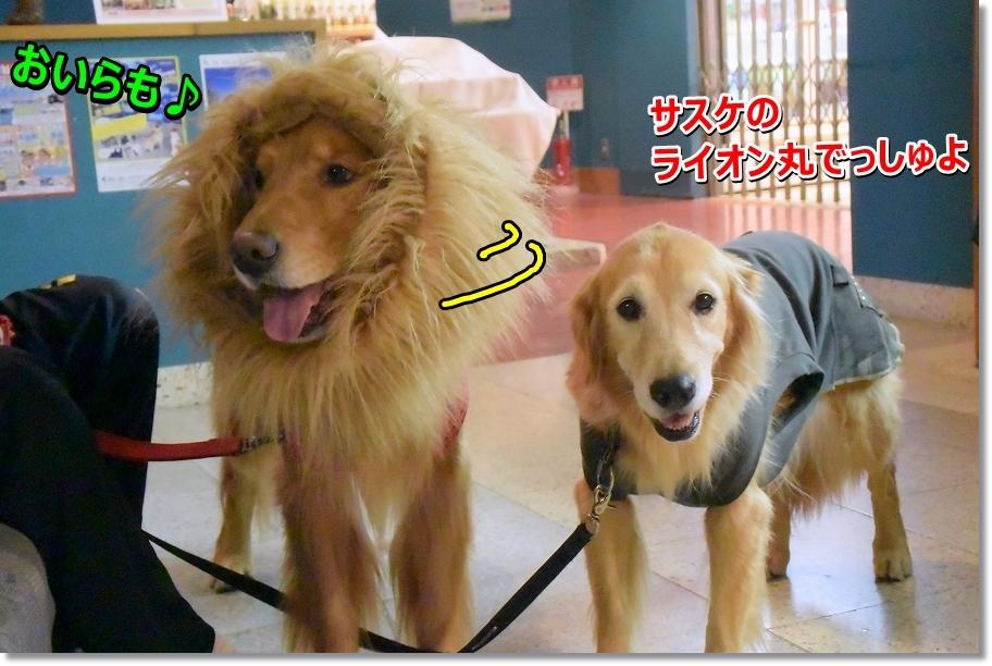 DSC_4804_20161216221934fb8.jpg