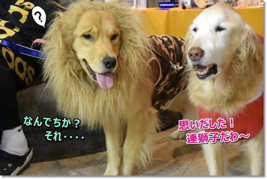 DSC_4814_20161216222003ea0.jpg
