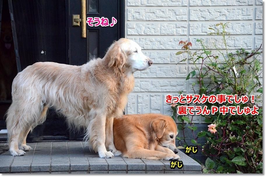 DSC_5080youryouiiwa.jpg
