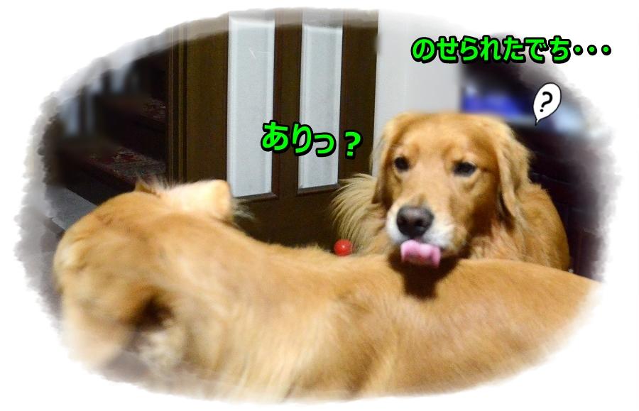 DSC_5097_20161121194016204.jpg