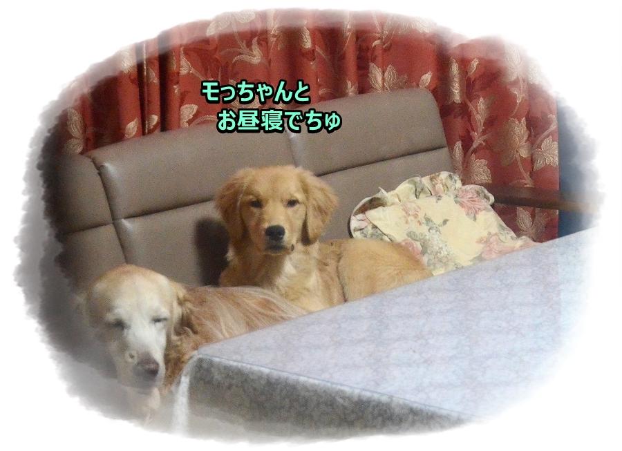 DSC_5633_201701121242528b0.jpg