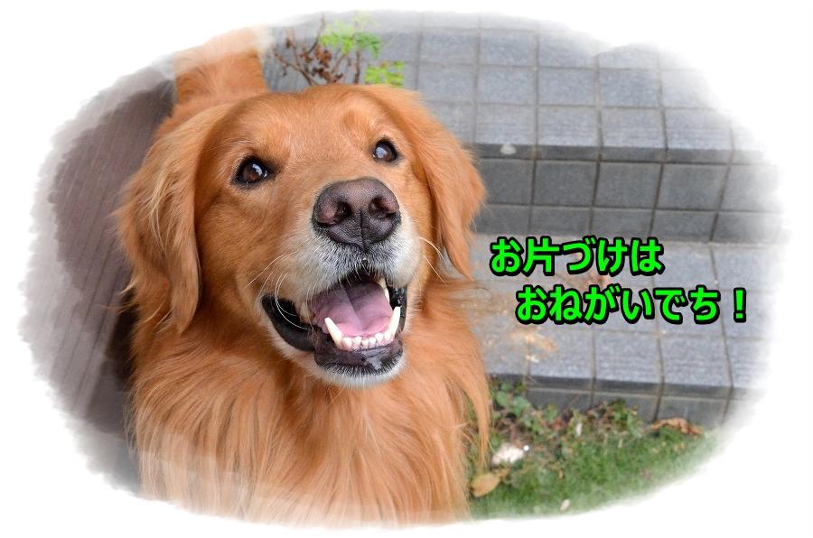 DSC_5988_20161123120719637.jpg