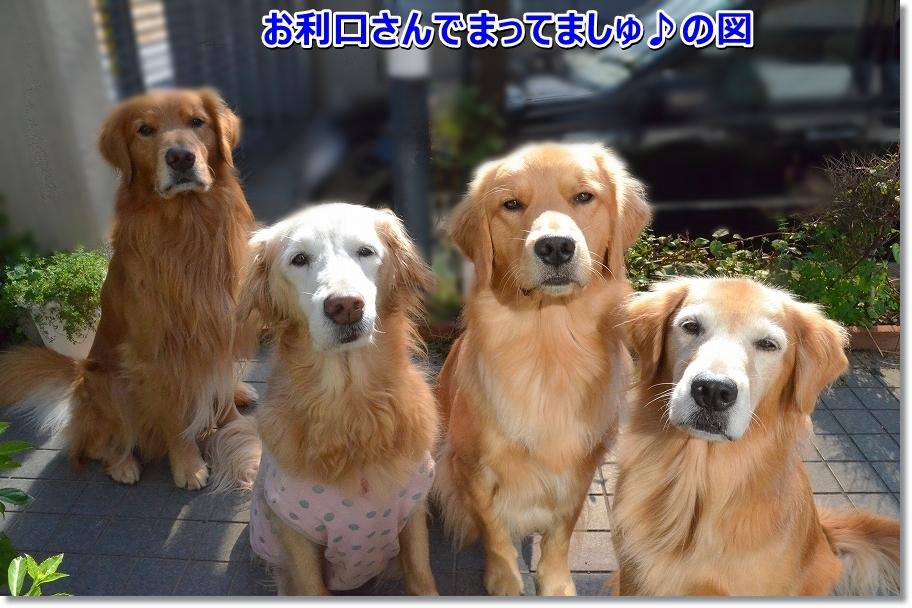 DSC_6062_201611241926445e4.jpg