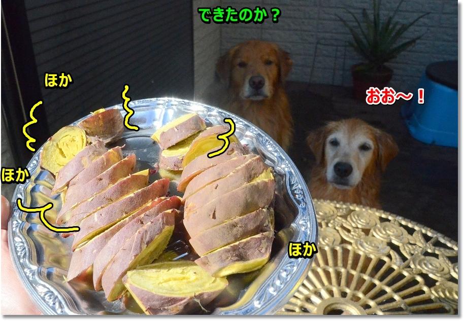 DSC_6130_20161126214829ee8.jpg