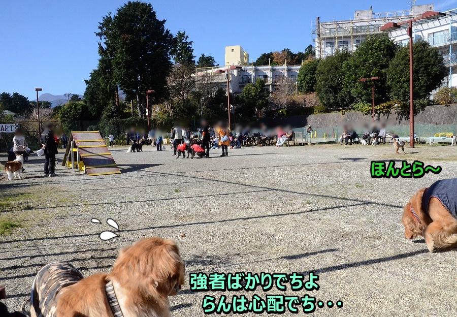 DSC_6554_20161217220017fb8.jpg