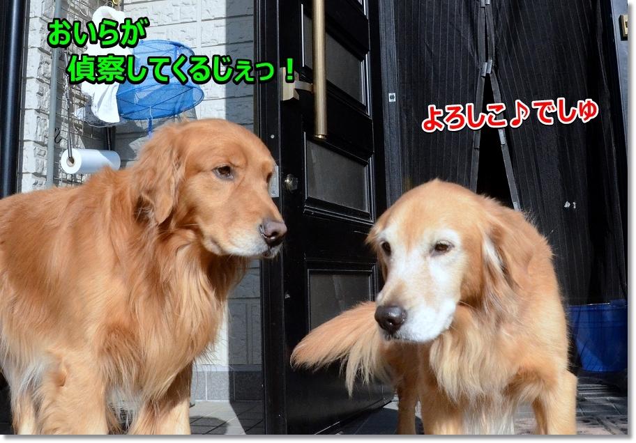 DSC_7050_201701242321336c4.jpg