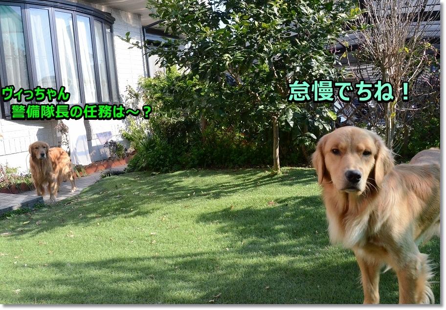 DSC_7081_201701242330591cc.jpg