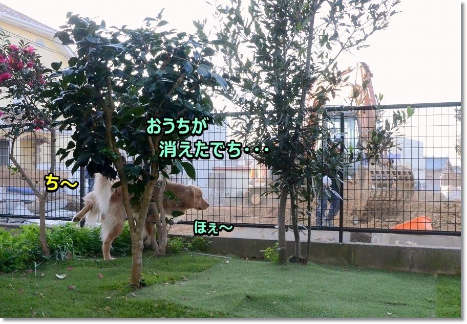 DSC_7408_20170126161437d1d.jpg
