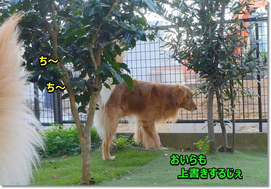 DSC_7412_2017012616151998b.jpg
