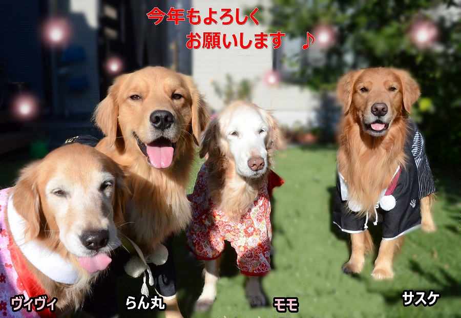 DSC_7691_201612312253201e4.jpg