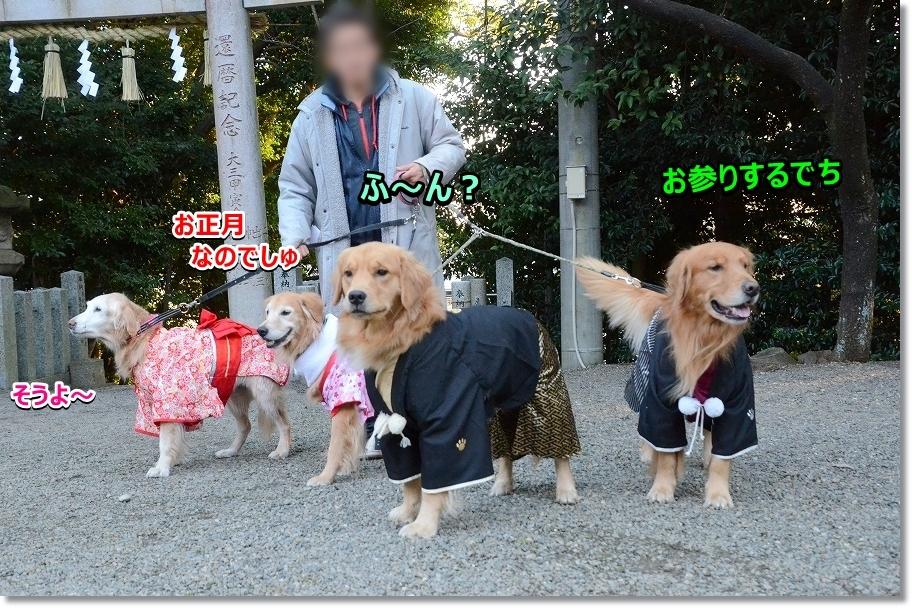 DSC_7925_20170101231529535.jpg