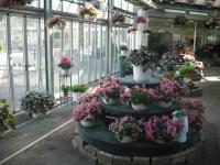 2017-01-29花と泉の公園029