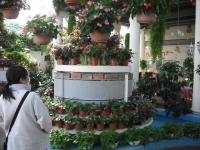 2017-01-29花と泉の公園028