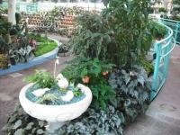 2017-01-29花と泉の公園027
