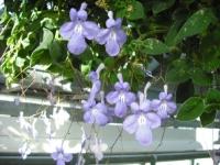 2017-01-29花と泉の公園038