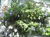 2017-01-29花と泉の公園037