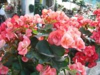 2017-01-29花と泉の公園036