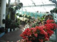 2017-01-29花と泉の公園035