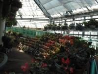 2017-01-29花と泉の公園033