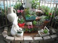 2017-01-29花と泉の公園075