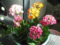 2017-01-29花と泉の公園086