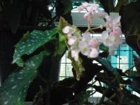 2017-01-29花と泉の公園120
