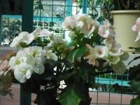 2017-01-29花と泉の公園133