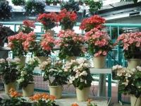 2017-01-29花と泉の公園131