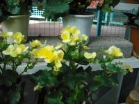 2017-01-29花と泉の公園129
