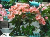 2017-01-29花と泉の公園135