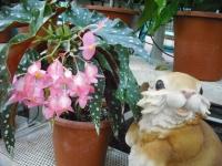 2017-01-29花と泉の公園145