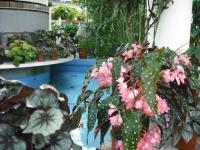 2017-01-29花と泉の公園148