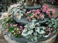 2017-01-29花と泉の公園165