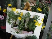 2017-01-29花と泉の公園170