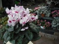 2017-01-29花と泉の公園169