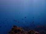 熱帯魚と降り注ぐ光