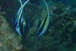 熱帯魚!!