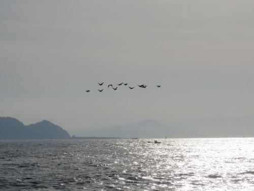 伊良湖岬 鳥