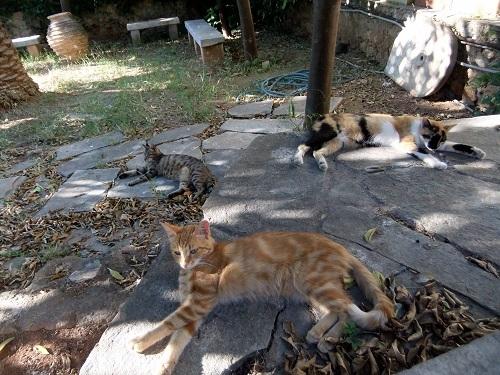 アテネ_アクロポリス北で猫給食 (1)