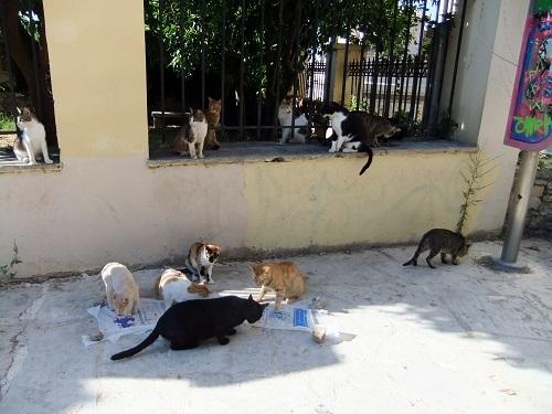 アテネ_アクロポリス北で猫給食 (4)