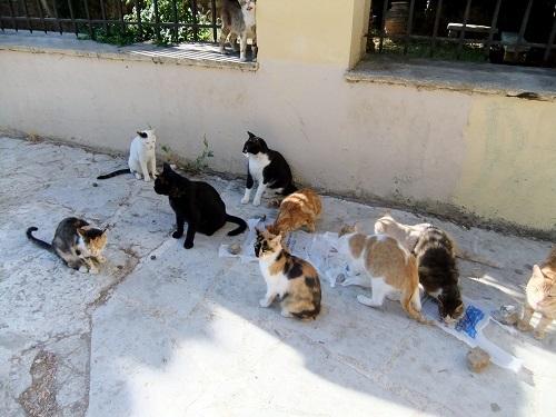 アテネ_アクロポリス北で猫給食 (5)