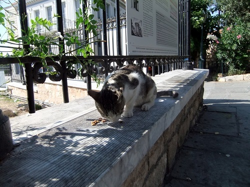 アテネ_風の塔で猫給食