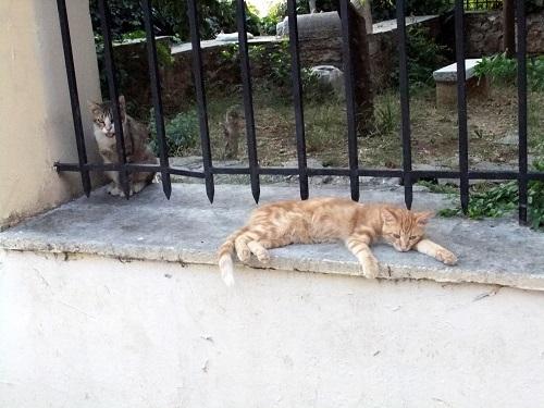 アテネ_アクロポリス北で猫給食 (3)