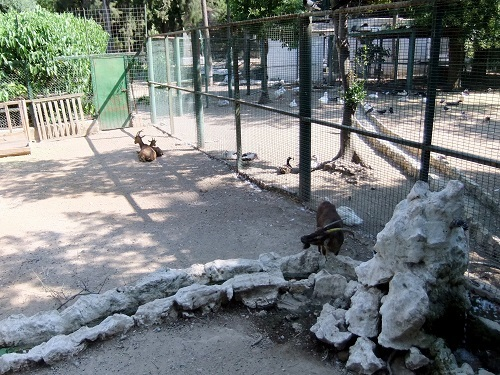 アテネ_国立庭園 (1)