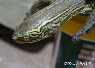 DSC_0448-s.jpg